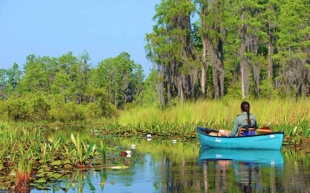 Protect the Okefenokee Swamp!